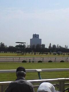 新潟競馬場です。